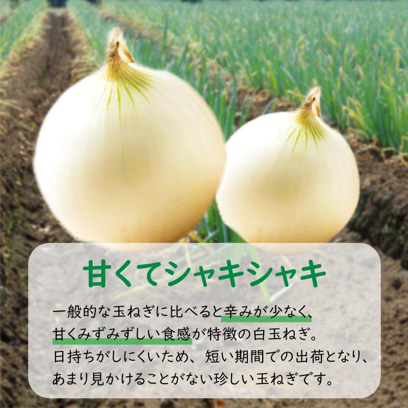 【A7-011】ところの白玉ねぎ 10kg