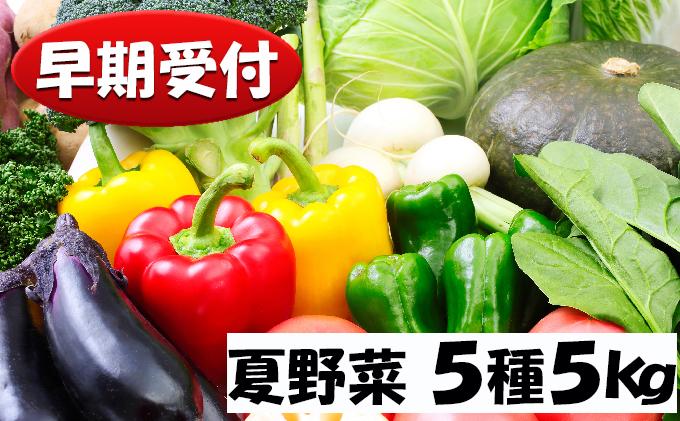 北海道産!!あきやまさん家の夏野菜5種詰め合わせ 5kg