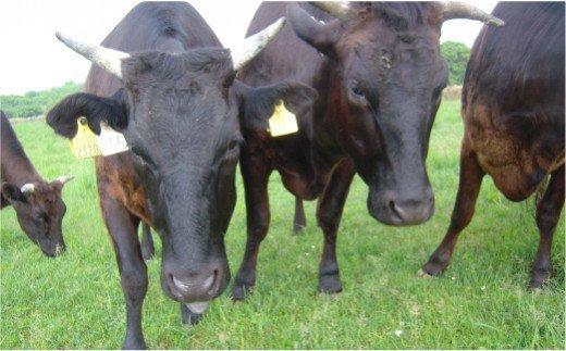 【A5等級】おくしり和牛 ももステーキ 100g×3枚