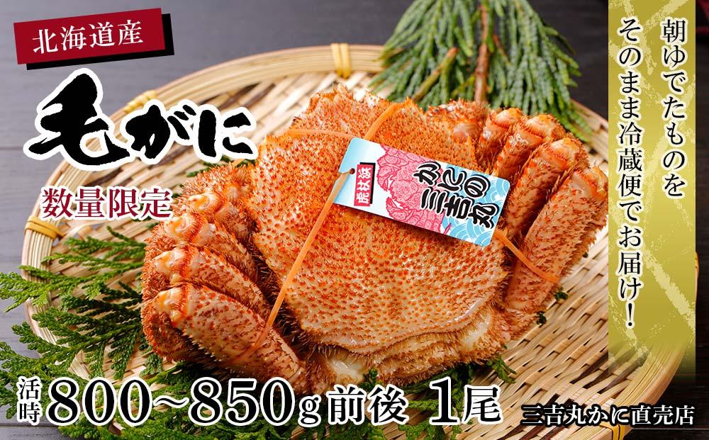 AS050 数量限定【朝ゆで】北海道産ボイル毛ガニ 1尾(活時800-850g前後)