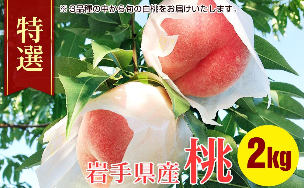 ふじむら農園の特撰白桃2kg