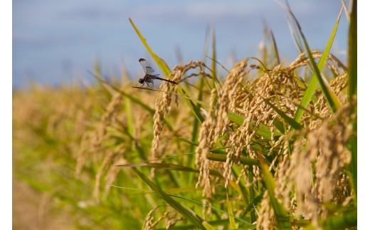 【令和3年産米】E2103 特別栽培米あきたこまち 精米5kg定期便(6ヶ月)