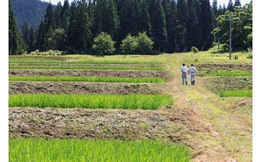 【令和3年産米】H2201 小野小町の郷特別栽培米あきたこまち 5kg×2袋