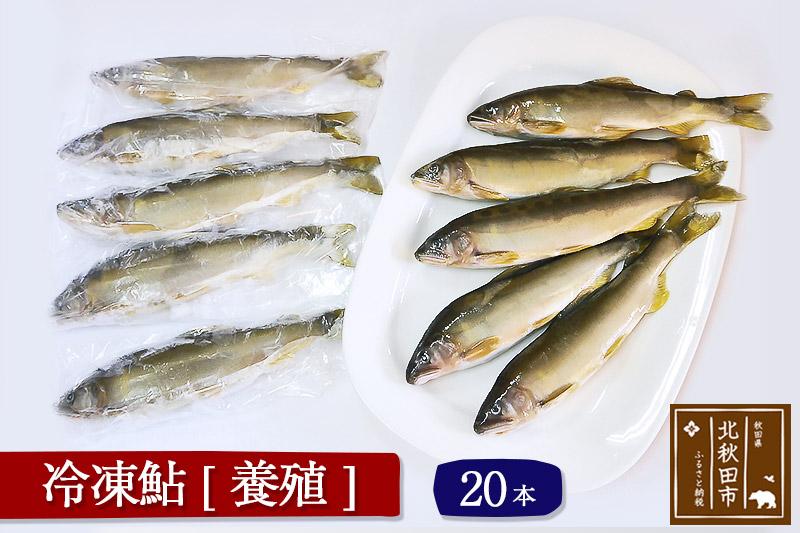 冷凍鮎 20本 個包装  秋田県北秋田市産あゆ(養殖)