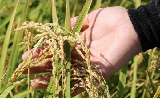 <2021年7月内発送>【令和2年産】茨城県のお米4種食べ比べ12kgセット(3kg×4袋)