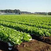 農業振興と商工業の育成に関する事業