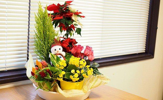 【花の定期便】1年中季節のお花を楽しめる!旬のお花盛り合わせ