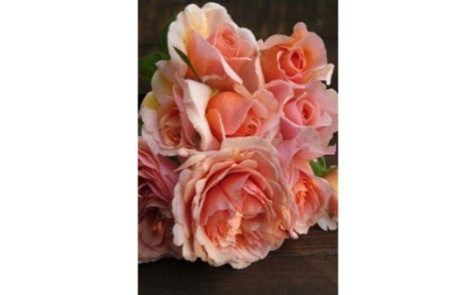 【Apple Roses】バラ苗 'メロウ' 大苗6号鉢植え