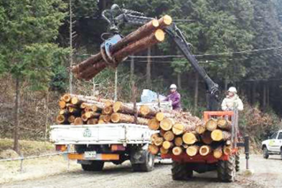森林文化都市基金