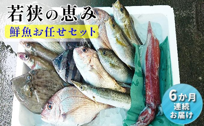 【定期便 6か月連続】若狭の恵み 鮮魚ボックス(種類はお任せ)