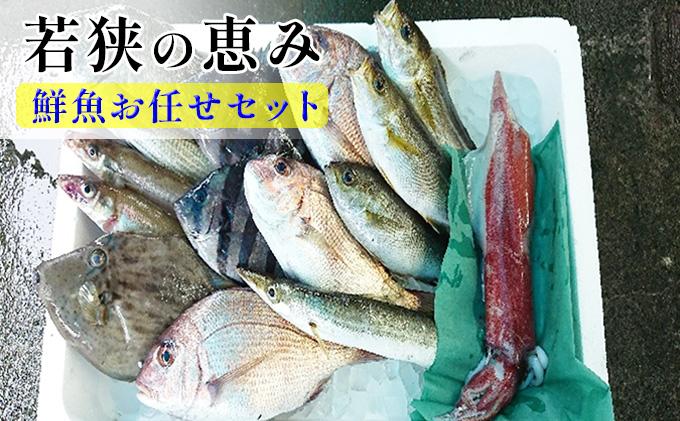 若狭の恵み 鮮魚ボックス(種類はお任せ)