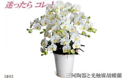 綺麗で丈夫な三河陶器で贈る光触媒胡蝶蘭大輪7本立(白の陶器×白色の花)H100-016