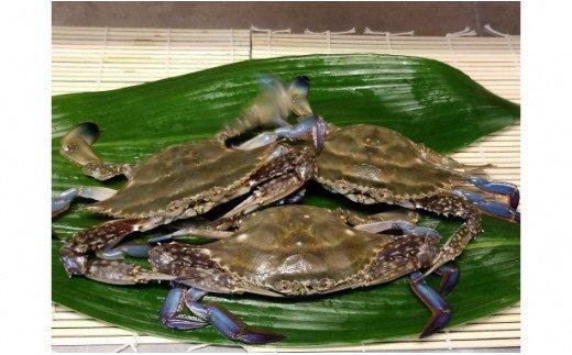 K011然渡り蟹1.3kg