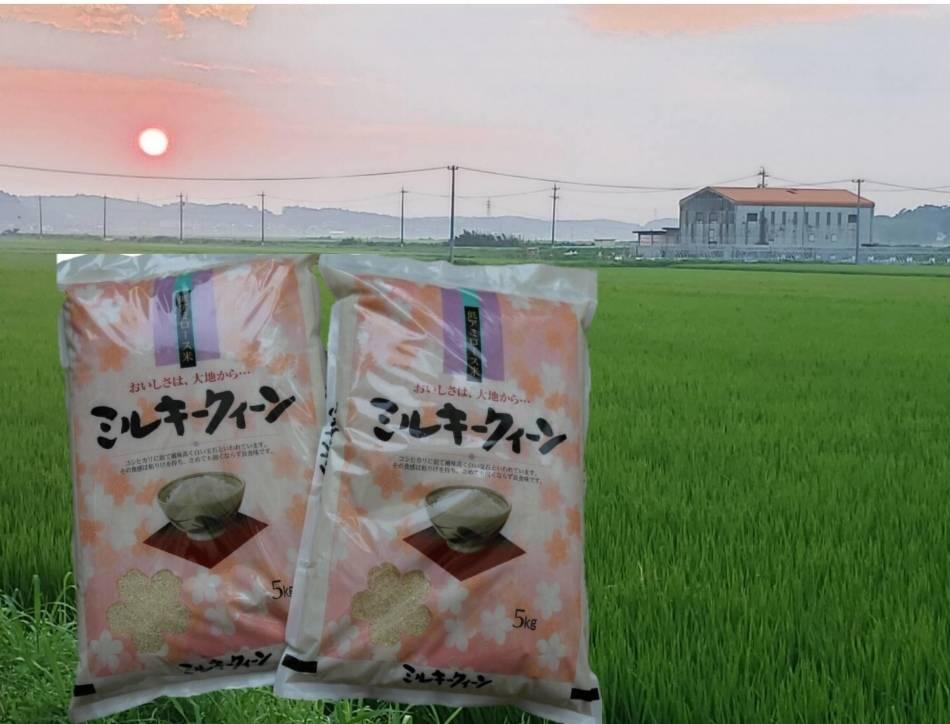 TC0404 特別栽培米のミルキークイーン10kg (R3.4月発送分)