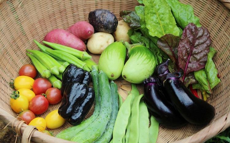新鮮お野菜ボックス(京都・京丹波町産)≪栽培期間中農薬不使用の安心安全こだわり野菜≫