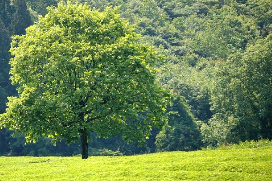 豊かで美しい環境を守るまちづくり