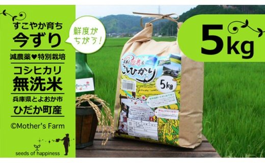 【新米】お米 5kg(白米)今ずり・無洗米 令和2年産 コシヒカリ 兵庫県但馬産