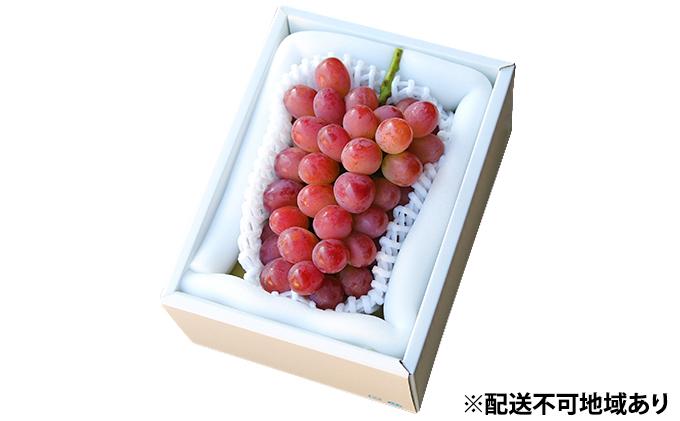 桃茂実苑 紫苑(しえん) 1房 500g以上