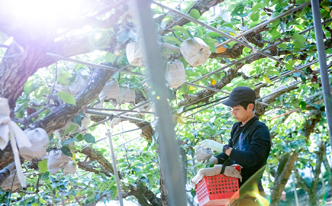 石原果樹園 あたご梨 6玉 合計約4.5kg(1玉約750g)贈答特選箱