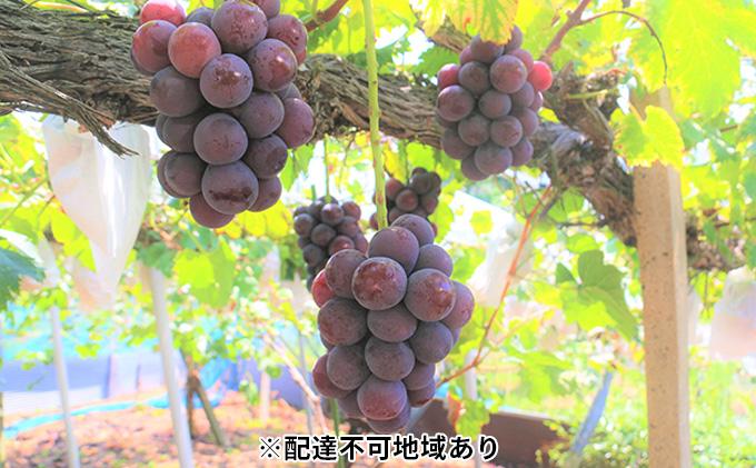 【ご家庭用】岡山県産 ニューピオーネ 2kg以上(5~6房)
