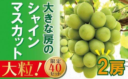 岡山のあまーいシャインマスカット2房(大房)