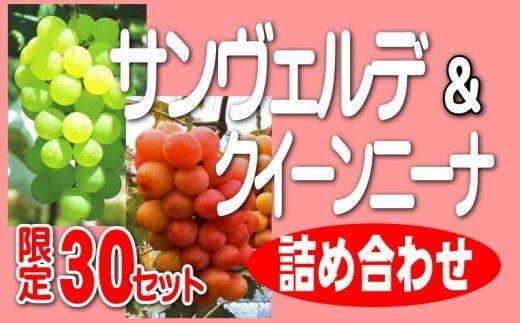 サンヴェルデ・クイーンニーナ詰め合わせ(2~3房)