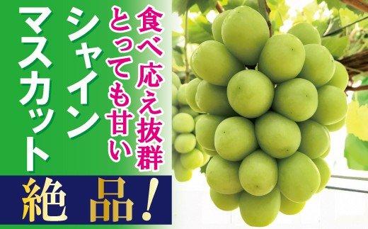 岡山のあま~い「シャインマスカット」約2kg(3~4房)