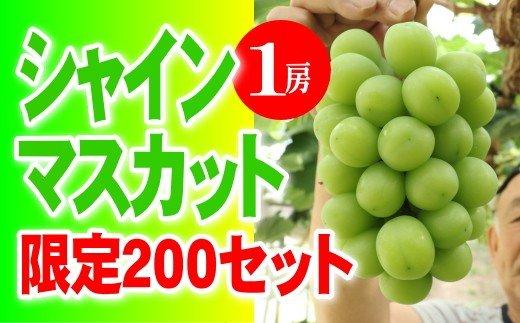シャインマスカット1房 大粒秀品(清麻呂ぶどう)