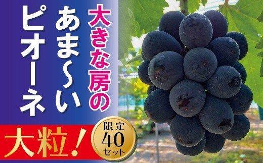 岡山のあまーい「ピオーネ」約2kg(3~5房)