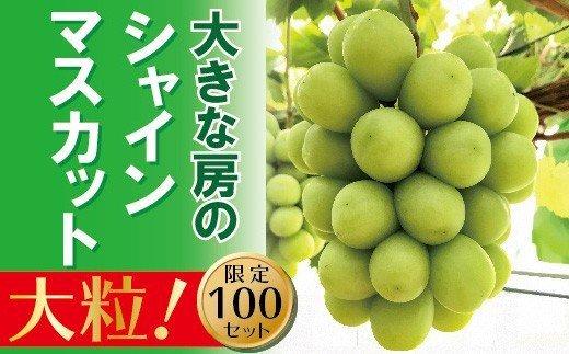岡山のあまーいシャインマスカット 1房(大房)