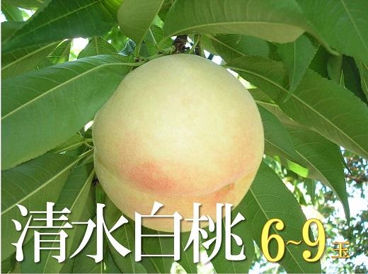 清水白桃(6~9個)