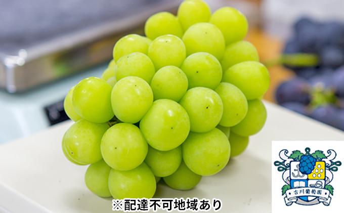 古川ぶどう園 岡山県産 シャインマスカット 約2kg(3~4房入り)