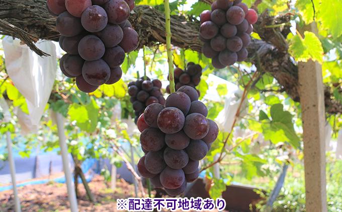 【ご家庭用】【数量限定】岡山県産ニューピオーネ 約2kg(3~5房)