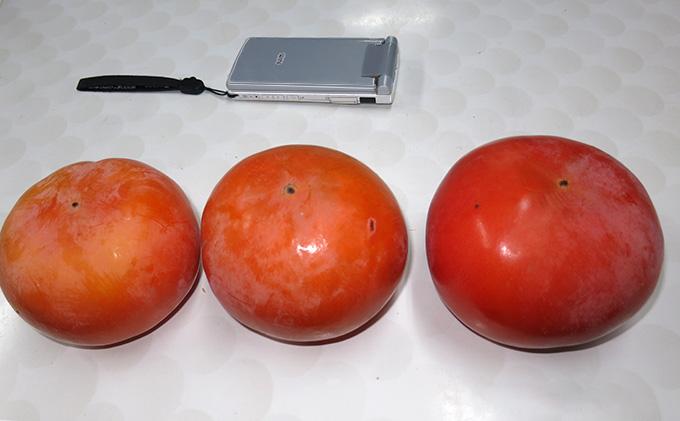 仁科農園産 富有柿(大)秋の味覚「里山長寿」6kg箱(20個前後入り)