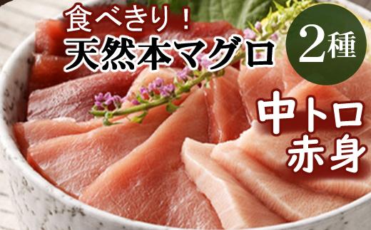 厳選天然本マグロ中トロ・赤身食べきりセット【400g】<まぐろ船元直送の天然鮪>