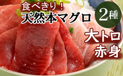 厳選天然本マグロ大トロ・赤身食べきりセット【約400g】<まぐろ船元直送の天然鮪>