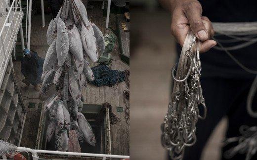 高豊丸 天然本マグロ(赤身・中トロ)切落し200g<遠洋まぐろ漁船漁獲の天然鮪>