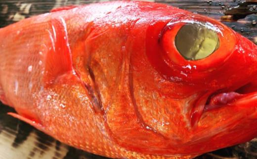 【四国一小さなまち】 ≪土佐沖獲れ≫ 高級魚『金目鯛』まるごと2匹(冷蔵)