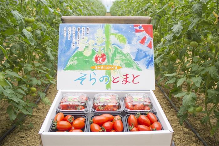 0072701 そらのミニトマト(約1.2kg)