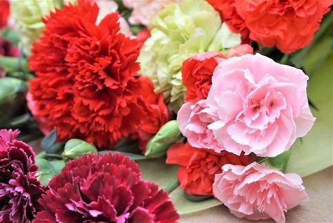 新鮮お花!福津産カーネーション(3~6月発送)★あんずの里[C0046]