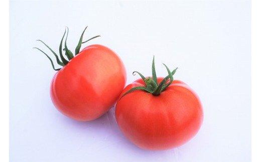 福津産★箱詰めトマト 2箱セット★あんずの里[C0043]