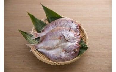連子鯛の干物 2枚
