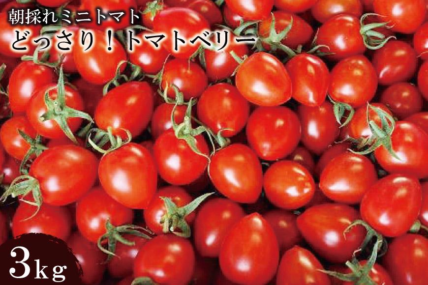朝採れミニトマト どっさり!トマトベリー 3kg
