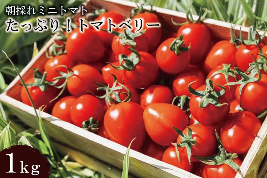 朝採れミニトマト たっぷり!トマトベリー 1kg