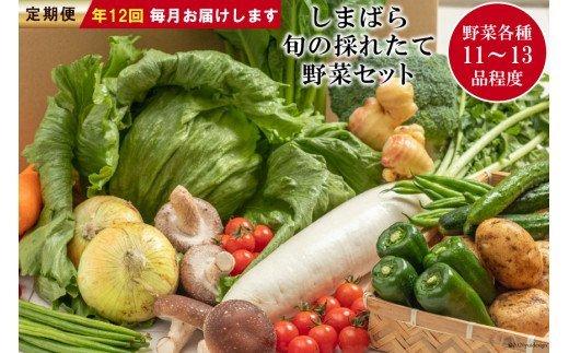 【定期便】しまばら旬の採れたて野菜セット 年12回お届け