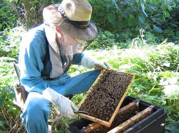 村木養蜂場 国産はちみつ500g(百花蜜)<村木養蜂場>【長崎県雲仙市】