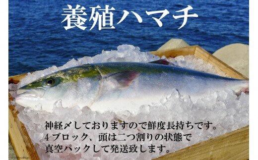 橘湾産養殖ハマチ 1本4kg(片身2kg)