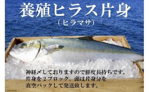 橘湾産養殖ヒラス(ヒラマサ) 片身2kg