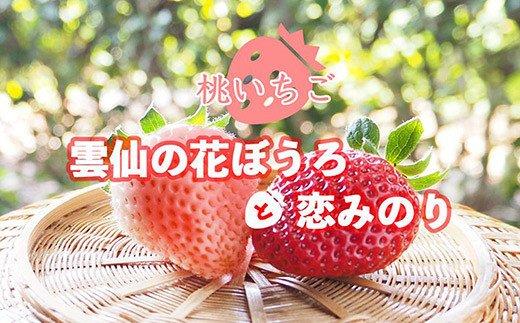 雲仙いちごの赤桃セット「恋みのり」「雲仙の花ぼうろ」4パック【11月下旬頃より順次発送】