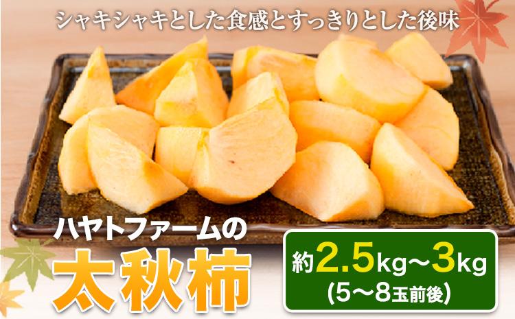 50年以上の歴史を持つ『ハヤトファーム』の太秋柿!  《10月中旬-11月中旬頃より順次出荷》シャキシャキ食感とすっきり後味 約2.5kg~3kg 5-8玉前後 予約受付中 フルーツ 秋 旬 柿